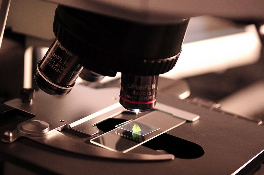 lamela experiment microscop