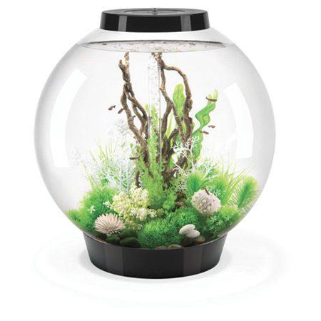 acvariu sferic