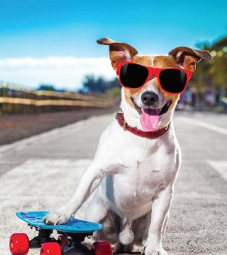 caiet cool dog