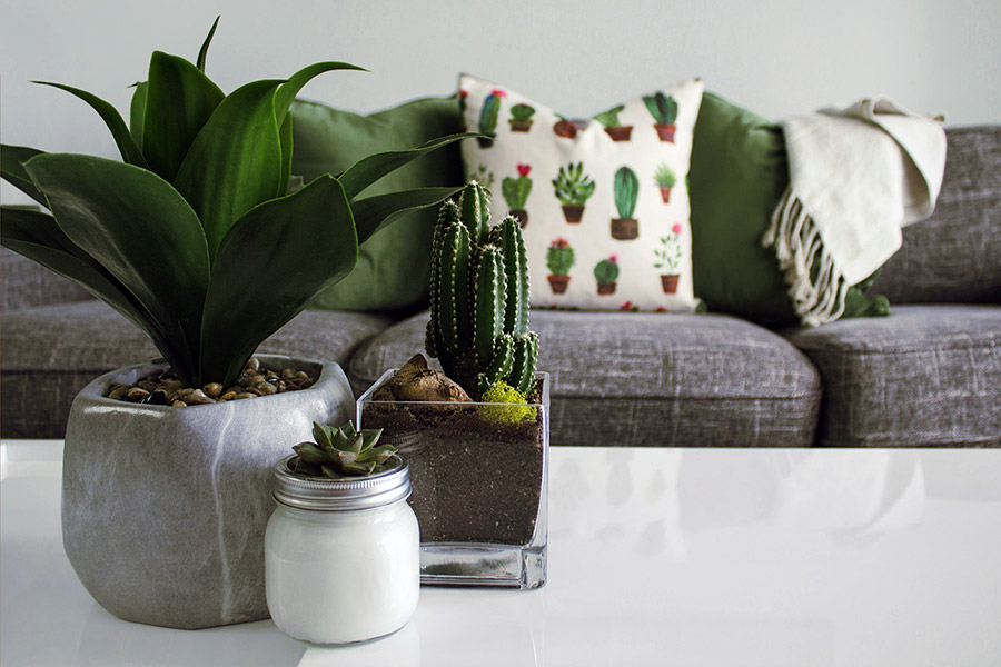 plantele filtreaza aerul